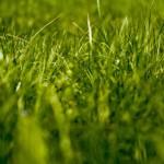 grass lawn maintenance