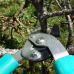 pruning for commercial landscapes